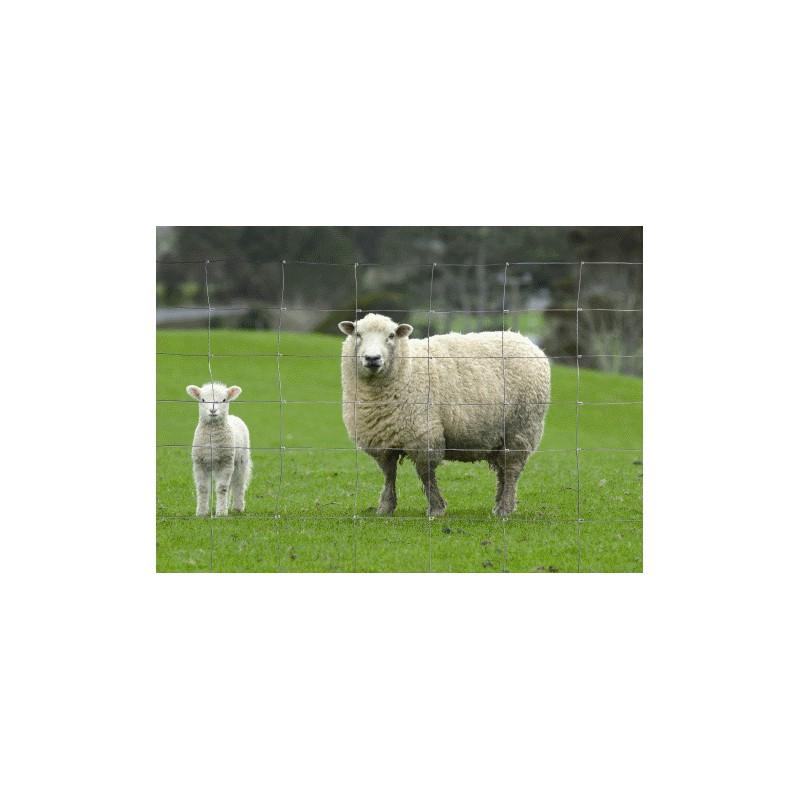 grillage mouton rouleau de 50ml. Black Bedroom Furniture Sets. Home Design Ideas